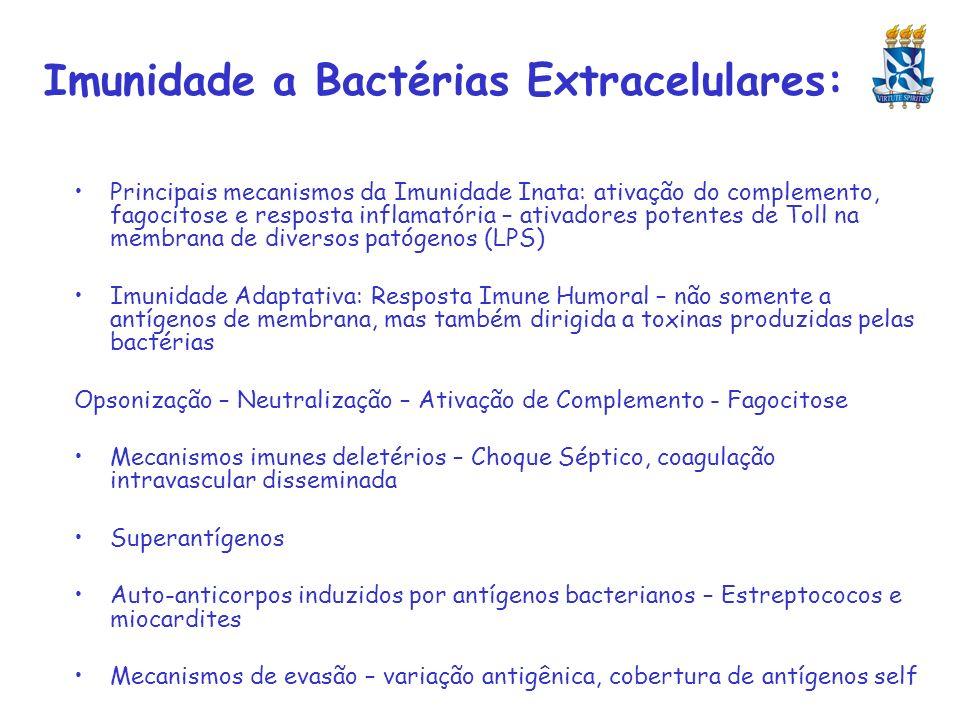 Imunidade a Bactérias Extracelulares: