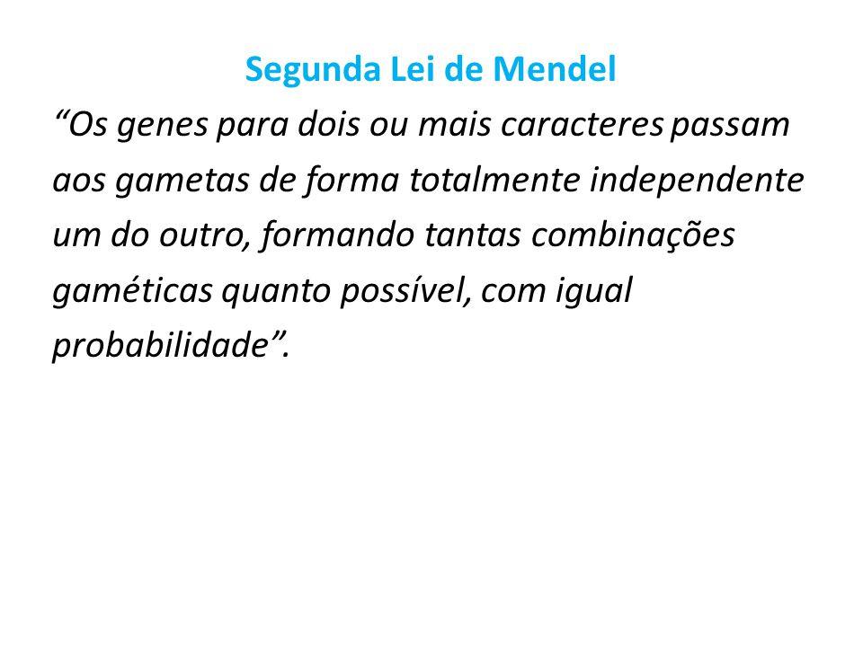 Segunda Lei de Mendel Os genes para dois ou mais caracteres passam aos gametas de forma totalmente independente um do outro, formando tantas combinações gaméticas quanto possível, com igual probabilidade .