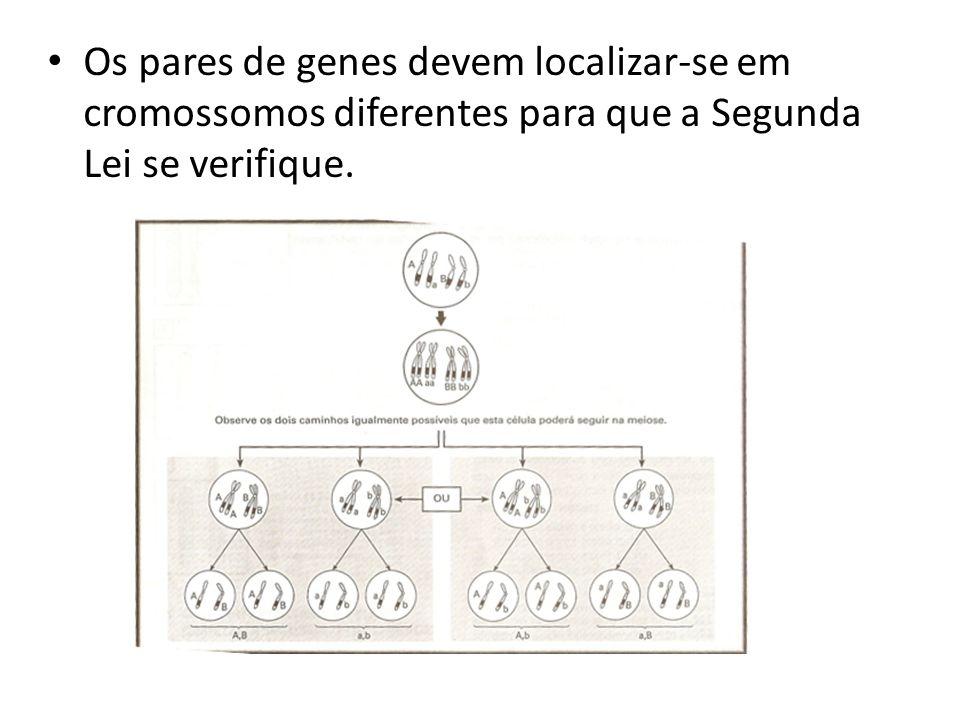 Os pares de genes devem localizar-se em cromossomos diferentes para que a Segunda Lei se verifique.