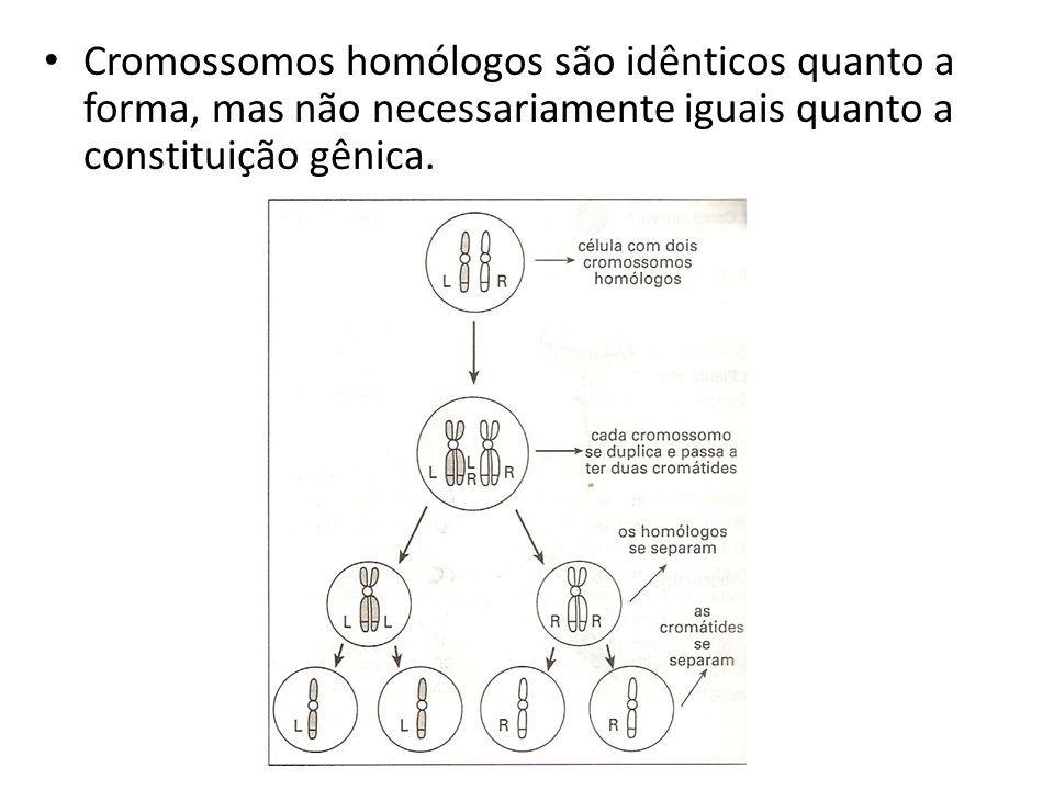Cromossomos homólogos são idênticos quanto a forma, mas não necessariamente iguais quanto a constituição gênica.