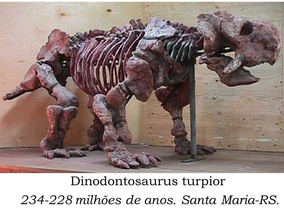 Dinodontosaurus turpior 234-228 milhões de anos. Santa Maria-RS.