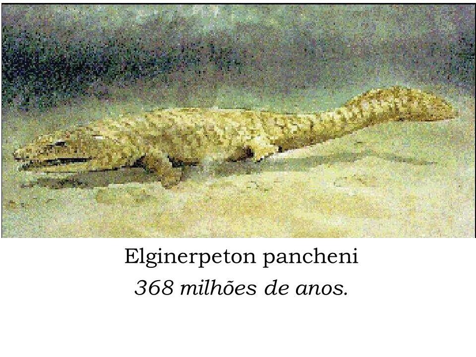 Elginerpeton pancheni