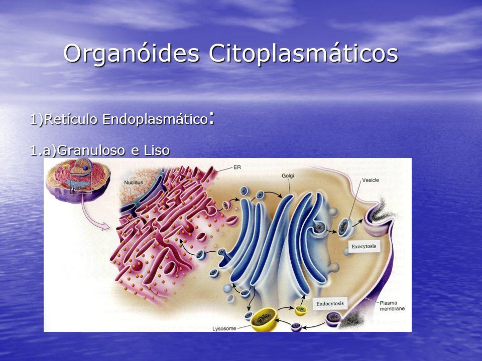 Organóides Citoplasmáticos