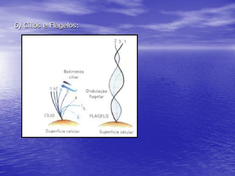 6) Cílios e Flagelos: