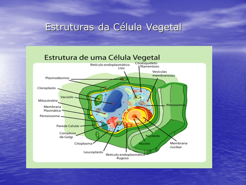 Estruturas da Célula Vegetal