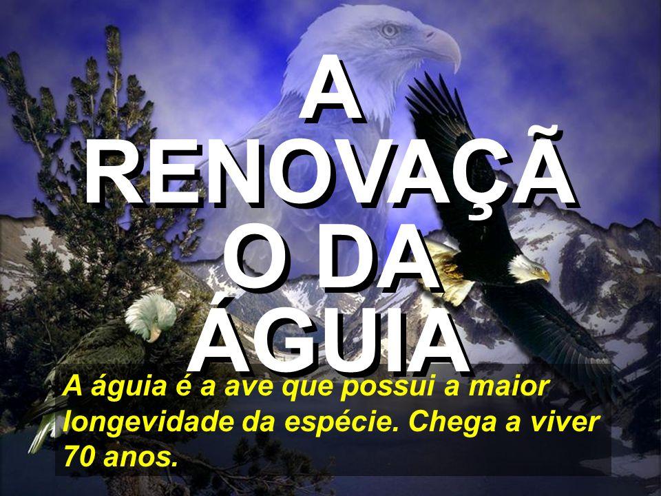 A RENOVAÇÃO DA ÁGUIAA águia é a ave que possui a maior longevidade da espécie.