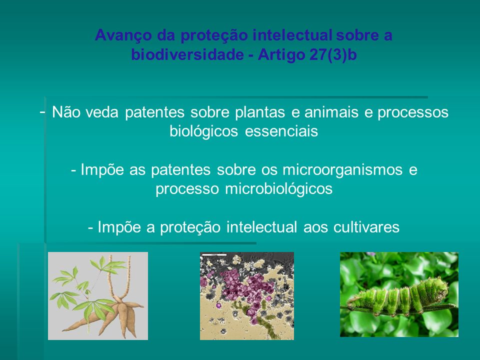 Avanço da proteção intelectual sobre a biodiversidade - Artigo 27(3)b - Não veda patentes sobre plantas e animais e processos biológicos essenciais - Impõe as patentes sobre os microorganismos e processo microbiológicos - Impõe a proteção intelectual aos cultivares