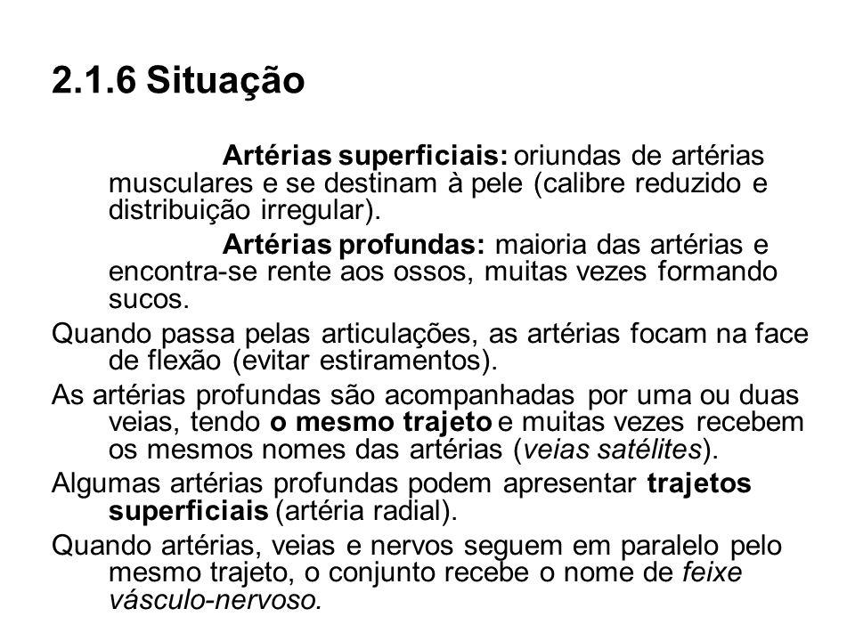 2.1.6 SituaçãoArtérias superficiais: oriundas de artérias musculares e se destinam à pele (calibre reduzido e distribuição irregular).