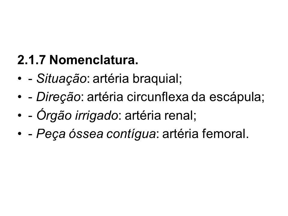 2.1.7 Nomenclatura.- Situação: artéria braquial; - Direção: artéria circunflexa da escápula; - Órgão irrigado: artéria renal;