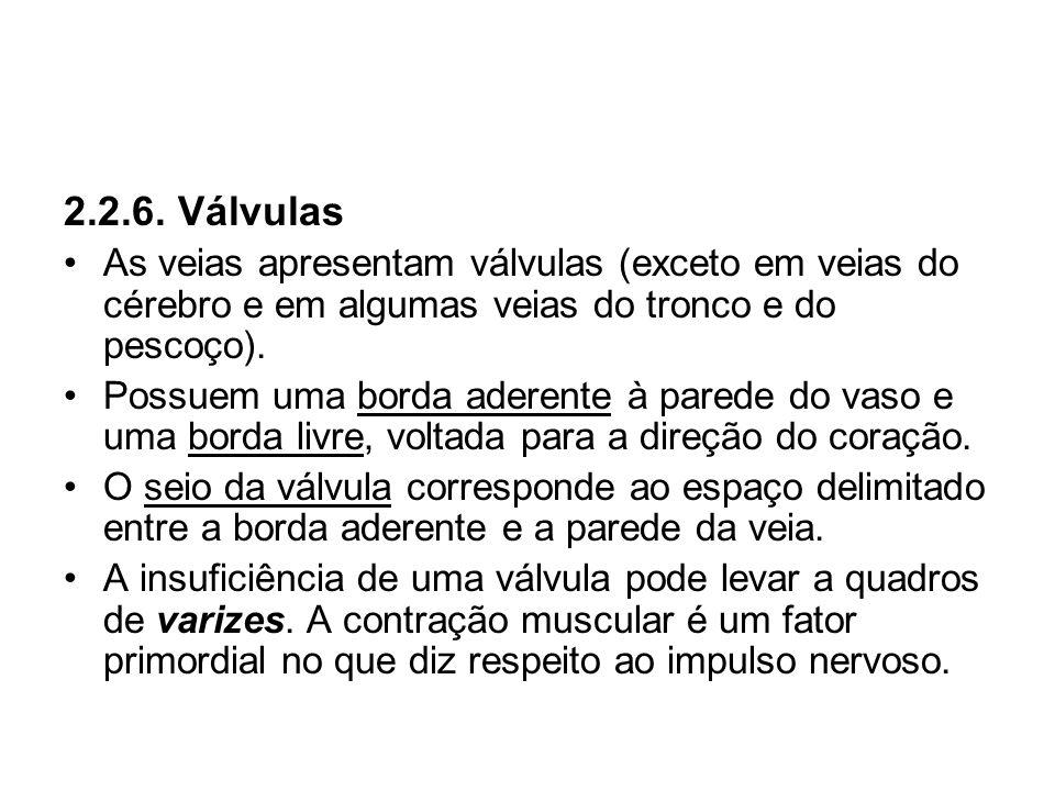 2.2.6. VálvulasAs veias apresentam válvulas (exceto em veias do cérebro e em algumas veias do tronco e do pescoço).