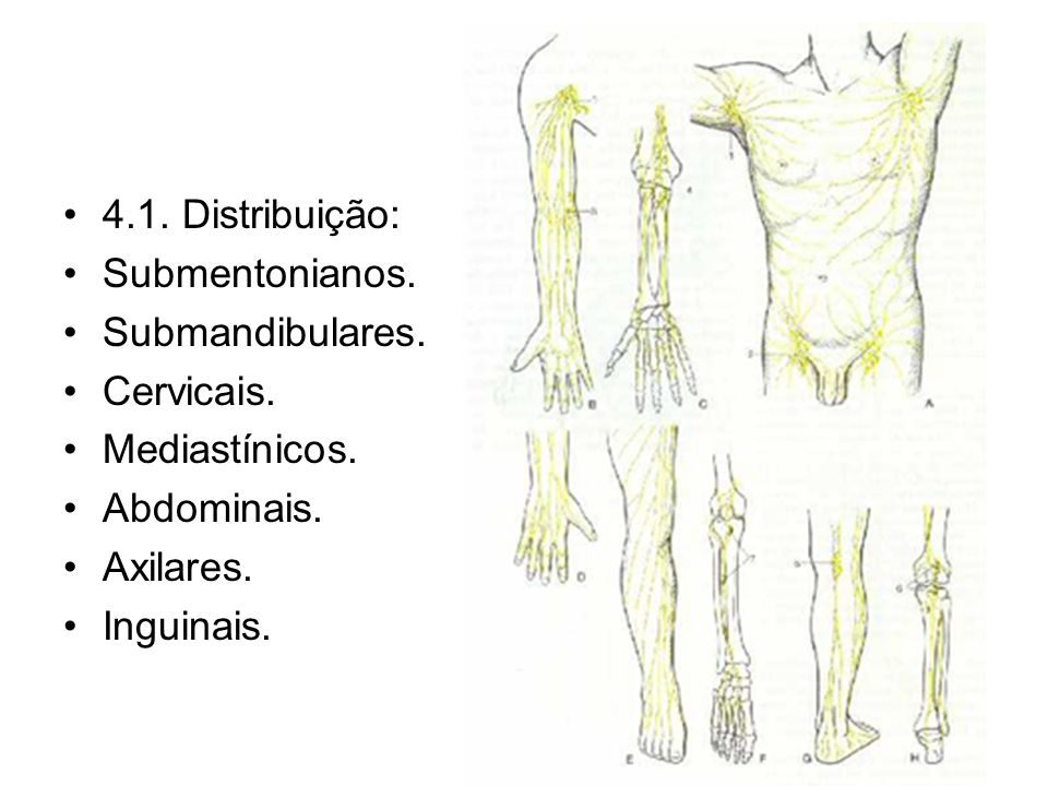 4.1.Distribuição:Submentonianos. Submandibulares.
