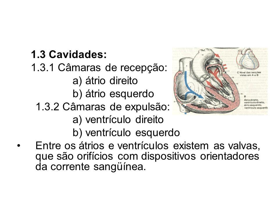 1.3 Cavidades:1.3.1 Câmaras de recepção: a) átrio direito. b) átrio esquerdo. 1.3.2 Câmaras de expulsão: