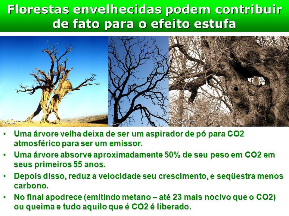 Florestas envelhecidas podem contribuir de fato para o efeito estufa