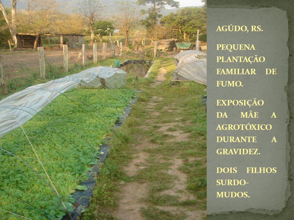 AGÚDO, RS. PEQUENA PLANTAÇÃO FAMILIAR DE FUMO. EXPOSIÇÃO DA MÃE A AGROTÓXICO DURANTE A GRAVIDEZ.
