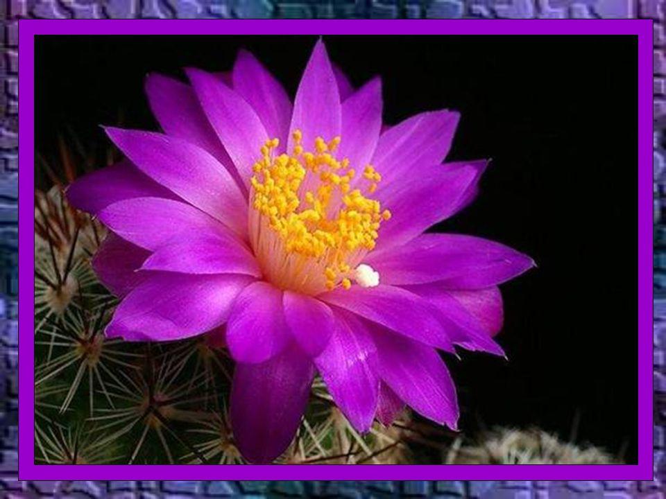 Deus – diz o livro da Sabedoria – não é o autor da morte, nem se alegra com a perdição dos vivos (1,13)