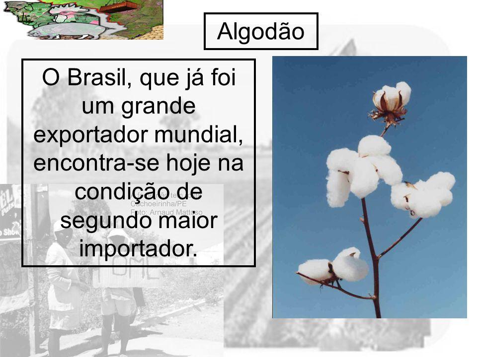 Algodão O Brasil, que já foi um grande exportador mundial, encontra-se hoje na condição de segundo maior importador.