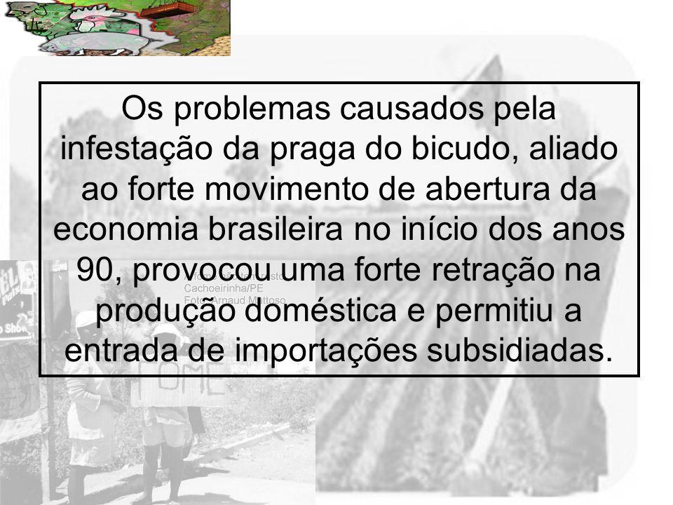 Os problemas causados pela infestação da praga do bicudo, aliado ao forte movimento de abertura da economia brasileira no início dos anos 90, provocou uma forte retração na produção doméstica e permitiu a entrada de importações subsidiadas.