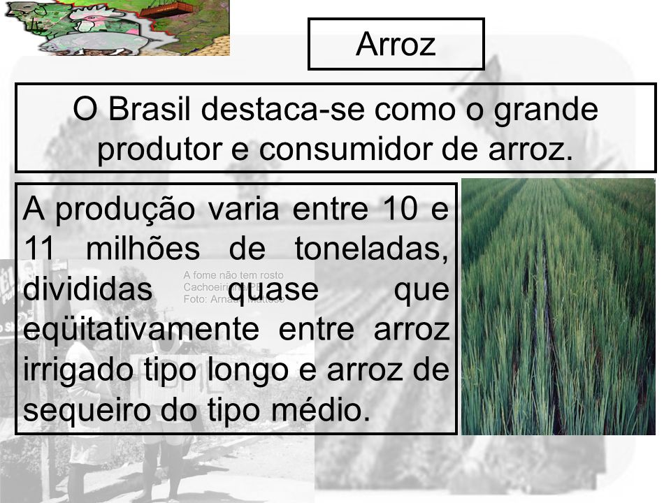 O Brasil destaca-se como o grande produtor e consumidor de arroz.