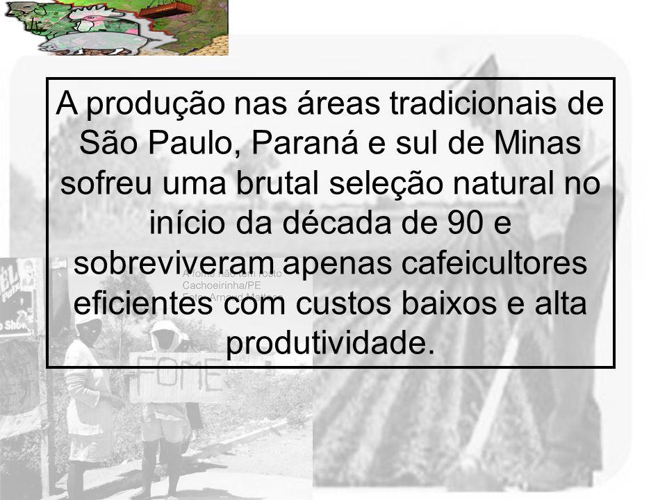 A produção nas áreas tradicionais de São Paulo, Paraná e sul de Minas sofreu uma brutal seleção natural no início da década de 90 e sobreviveram apenas cafeicultores eficientes com custos baixos e alta produtividade.