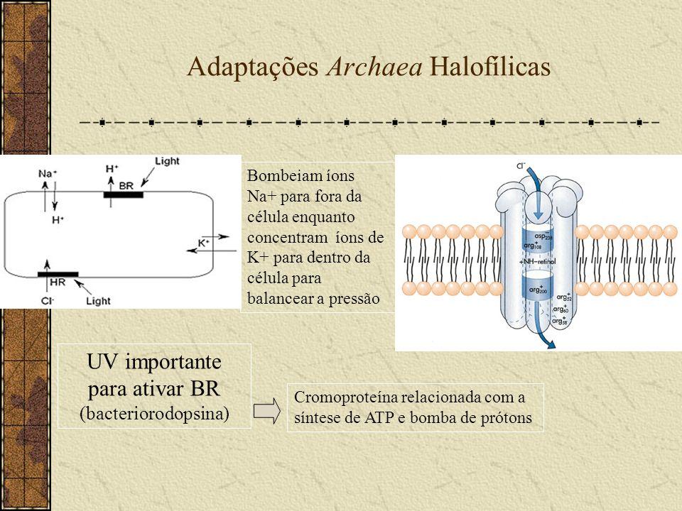 Adaptações Archaea Halofílicas