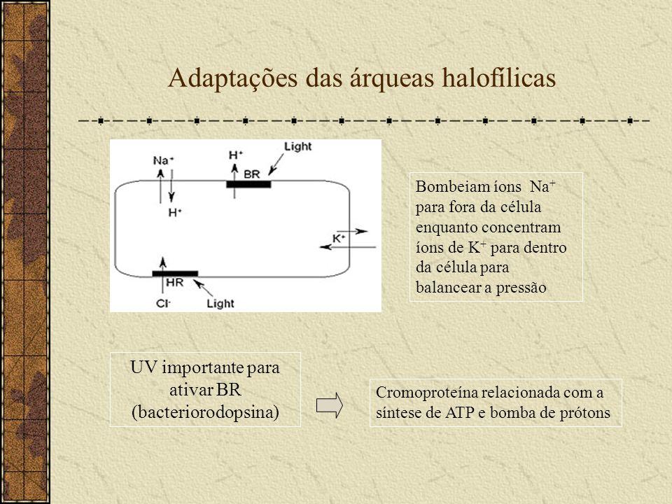 Adaptações das árqueas halofílicas