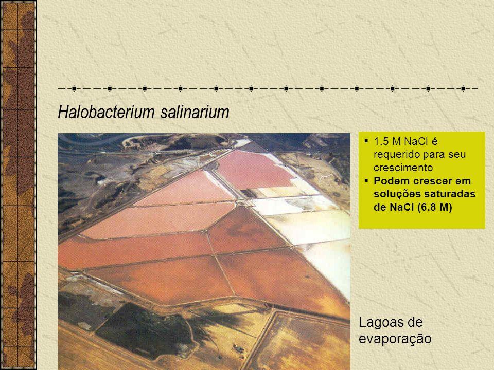 Halobacterium salinarium