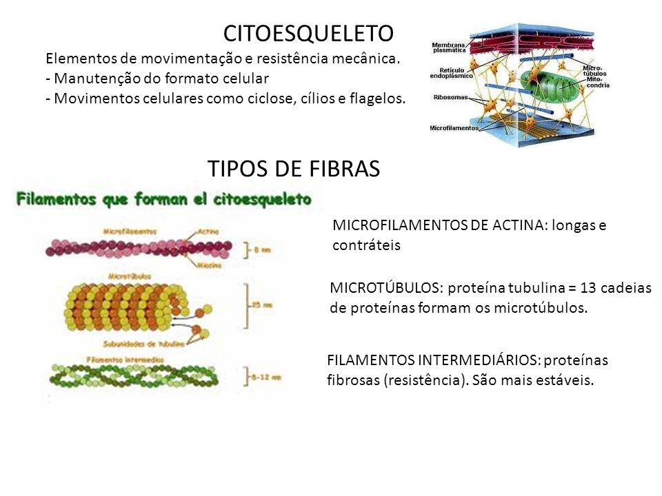 CITOESQUELETO TIPOS DE FIBRAS