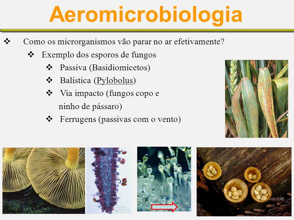 Aeromicrobiologia Como os microrganismos vão parar no ar efetivamente