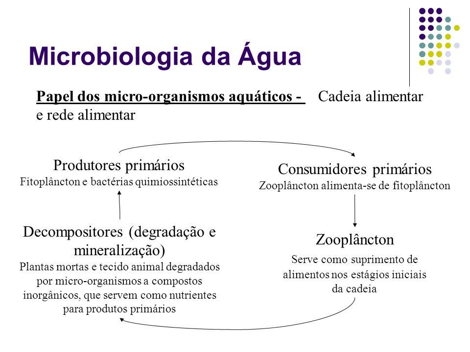 Microbiologia da Água Papel dos micro-organismos aquáticos - Cadeia alimentar e rede alimentar. Produtores primários.