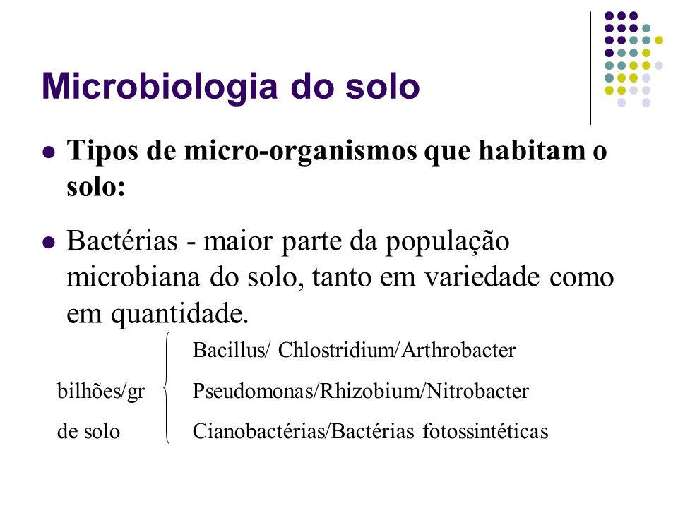 Microbiologia do solo Tipos de micro-organismos que habitam o solo: