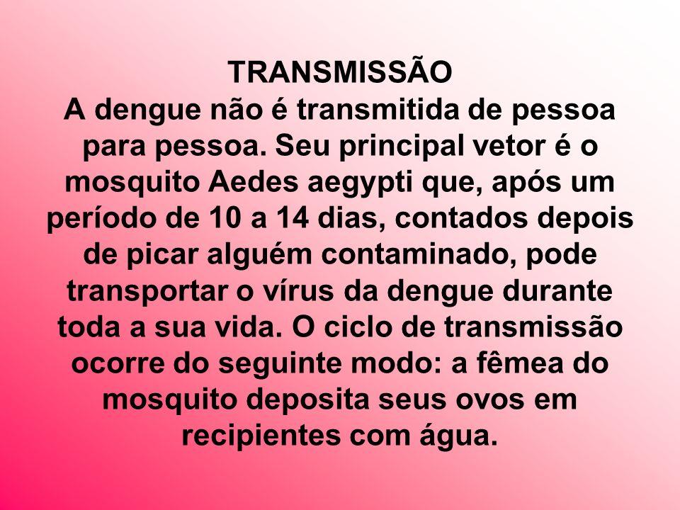 TRANSMISSÃO A dengue não é transmitida de pessoa para pessoa