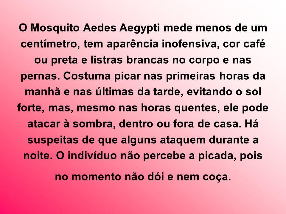 O Mosquito Aedes Aegypti mede menos de um centímetro, tem aparência inofensiva, cor café ou preta e listras brancas no corpo e nas pernas.