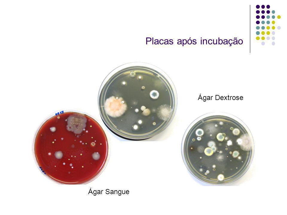 Placas após incubação Ágar Dextrose Ágar Sangue
