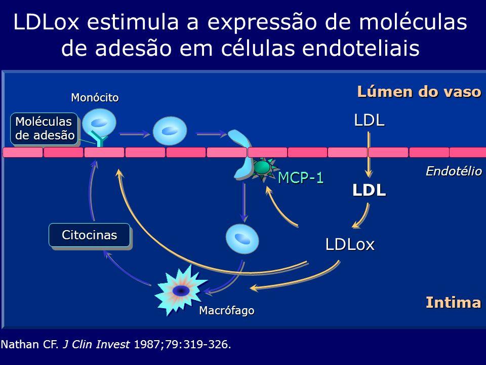 LDLox estimula a expressão de moléculas de adesão em células endoteliais