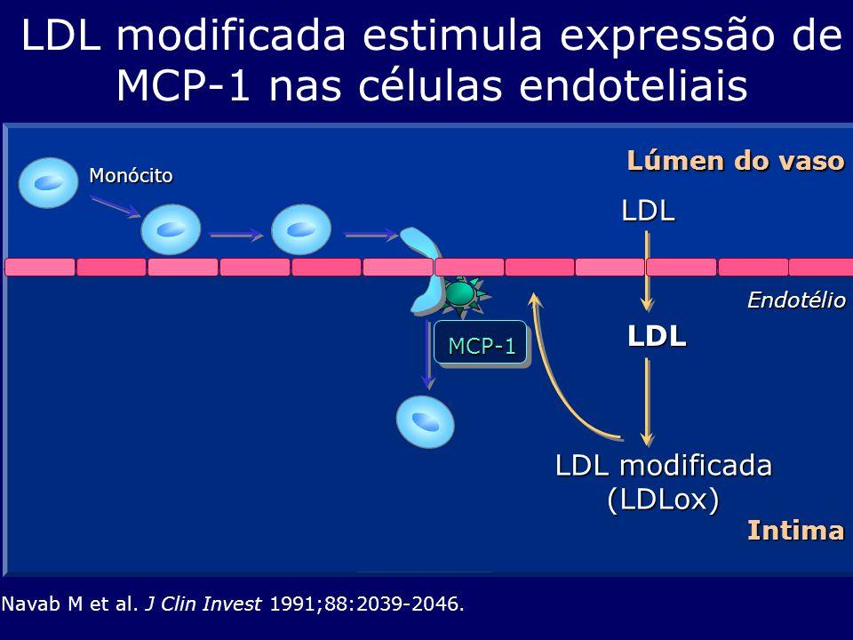 LDL modificada estimula expressão de MCP-1 nas células endoteliais
