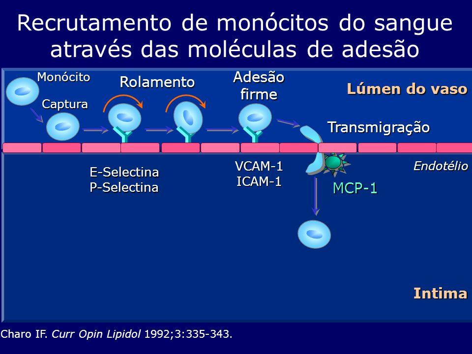 Recrutamento de monócitos do sangue através das moléculas de adesão