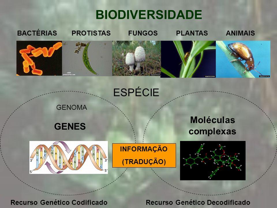 BIODIVERSIDADE ESPÉCIE Moléculas complexas GENES BACTÉRIAS PROTISTAS