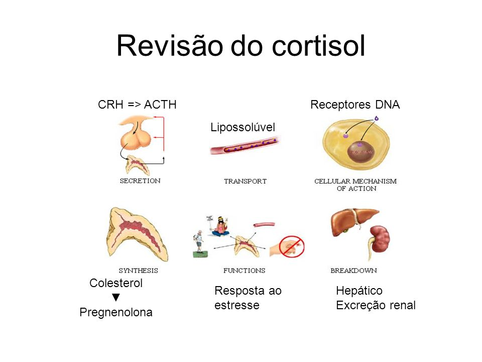 Revisão do cortisol CRH => ACTH Receptores DNA Lipossolúvel