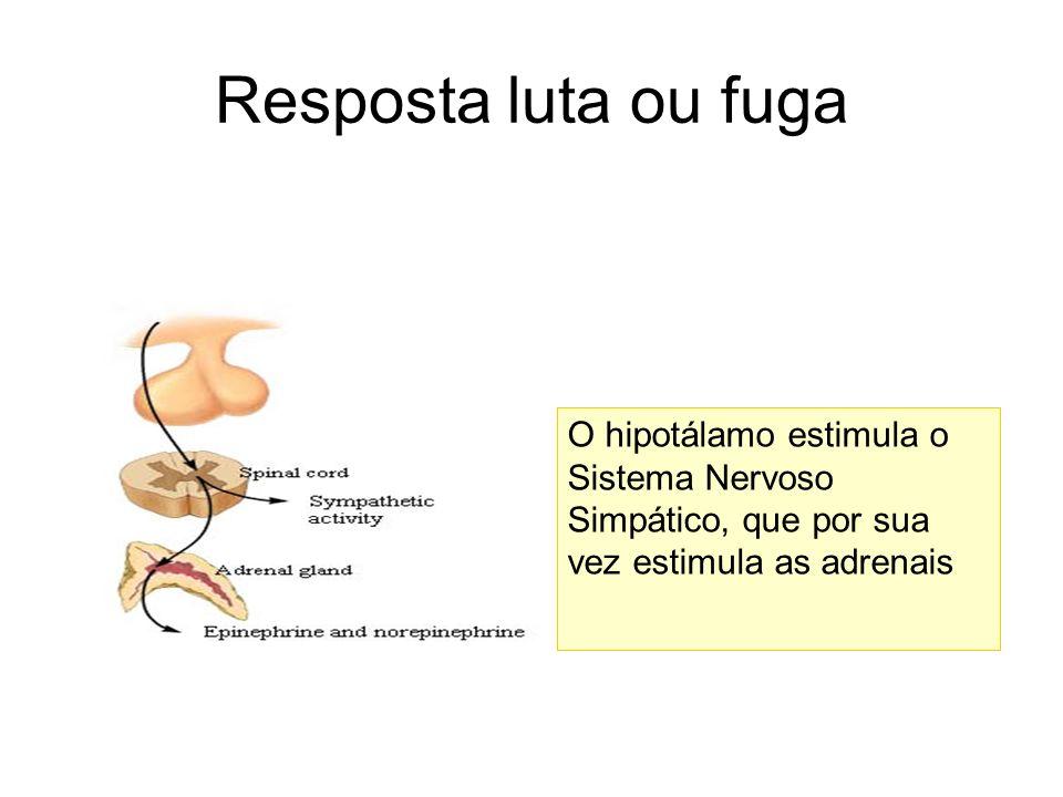 Resposta luta ou fuga O hipotálamo estimula o Sistema Nervoso Simpático, que por sua vez estimula as adrenais.
