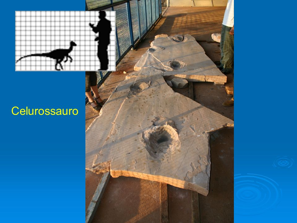 Celurossauro