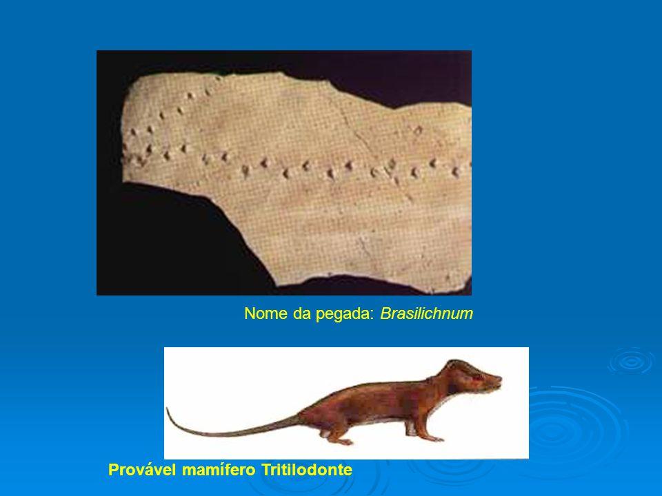 4 Nome da pegada: Brasilichnum Provável mamífero Tritilodonte