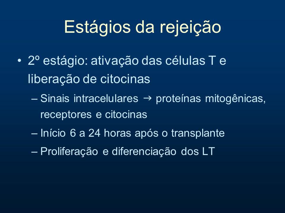 Estágios da rejeição 2º estágio: ativação das células T e liberação de citocinas.