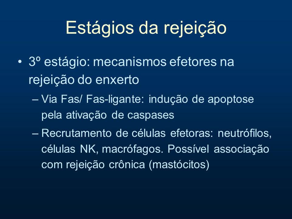 Estágios da rejeição3º estágio: mecanismos efetores na rejeição do enxerto. Via Fas/ Fas-ligante: indução de apoptose pela ativação de caspases.