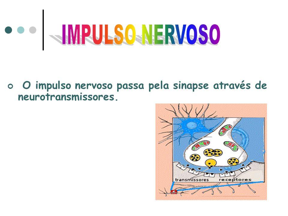IMPULSO NERVOSO O impulso nervoso passa pela sinapse através de neurotransmissores.