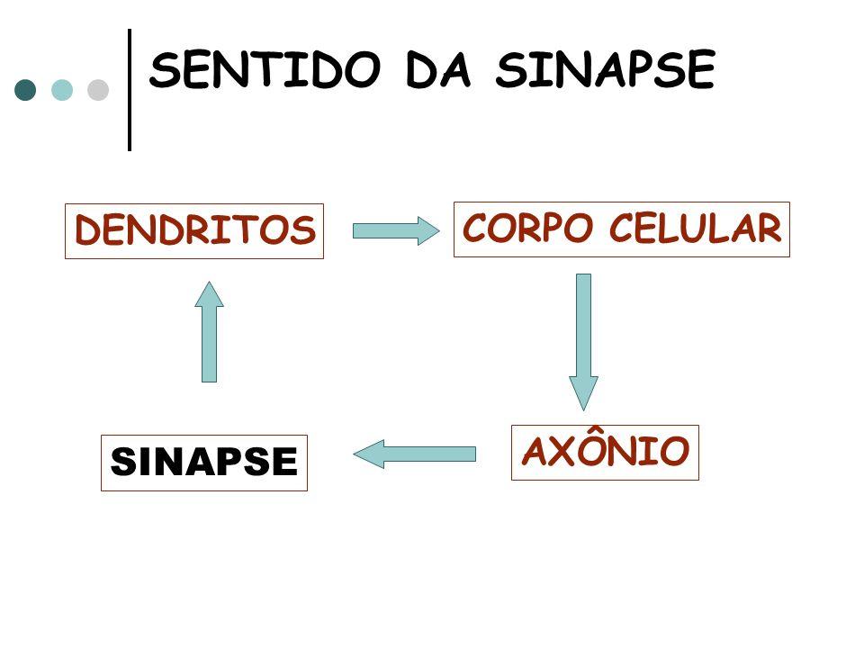 SENTIDO DA SINAPSE DENDRITOS CORPO CELULAR AXÔNIO SINAPSE