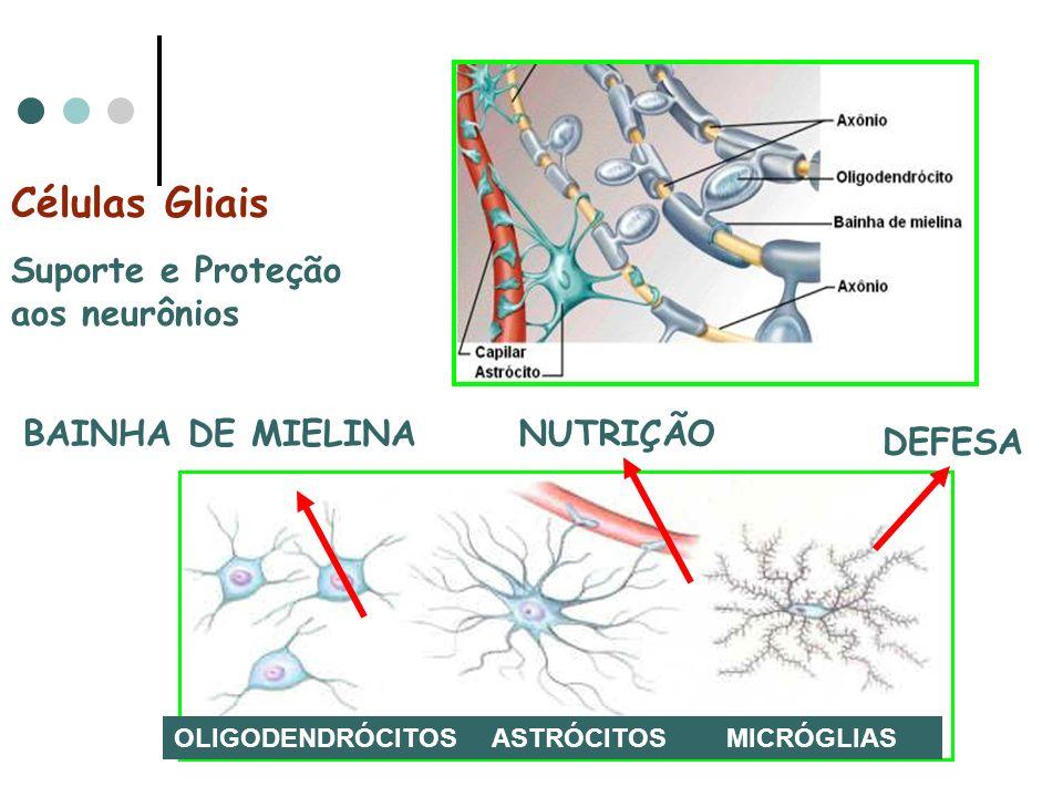Células Gliais Suporte e Proteção aos neurônios BAINHA DE MIELINA