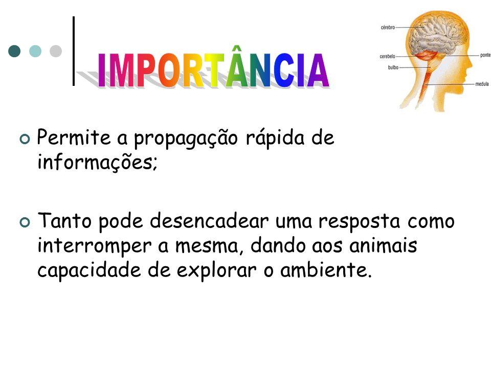 IMPORTÂNCIA Permite a propagação rápida de informações;