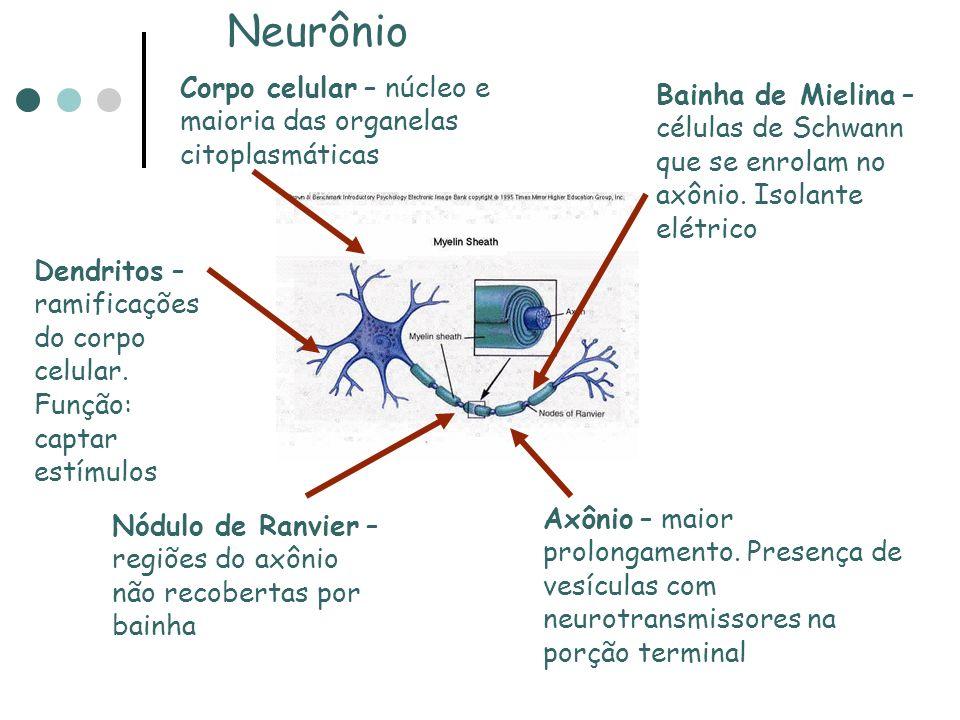 Neurônio Corpo celular – núcleo e maioria das organelas citoplasmáticas.