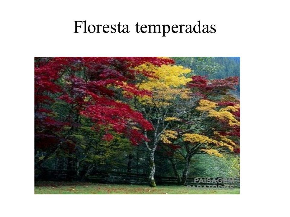 Floresta temperadas