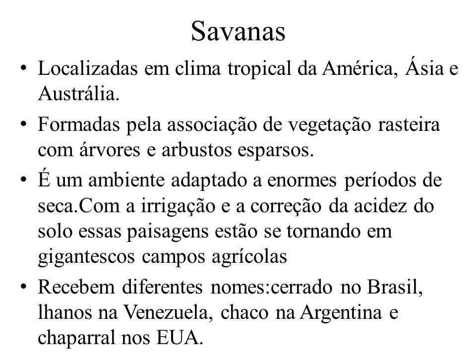 Savanas Localizadas em clima tropical da América, Ásia e Austrália.
